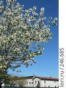 Купить «Итальянская весна», фото № 246685, снято 4 апреля 2008 г. (c) Demyanyuk Kateryna / Фотобанк Лори