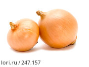 Купить «Две луковицы», фото № 247157, снято 10 апреля 2008 г. (c) Угоренков Александр / Фотобанк Лори