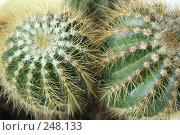 Купить «Кактус», фото № 248133, снято 28 марта 2008 г. (c) Юлия Смольская / Фотобанк Лори