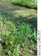 Купить «Река Баканка», фото № 249757, снято 12 апреля 2008 г. (c) Федор Королевский / Фотобанк Лори