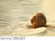 Купить «Кокосовый орех на песке», фото № 250021, снято 29 декабря 2007 г. (c) Бутенко Андрей / Фотобанк Лори
