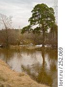 Купить «Сосна над рекой», фото № 252069, снято 12 апреля 2008 г. (c) Александр Лядов / Фотобанк Лори