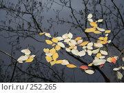 Глубокая осень. Стоковое фото, фотограф Игорь Романов / Фотобанк Лори