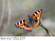 Купить «Весенняя бабочка», фото № 252277, снято 12 апреля 2008 г. (c) Малышева Мария / Фотобанк Лори