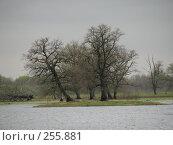 Купить «На страже реки (Долина реки Уборть)», фото № 255881, снято 13 апреля 2008 г. (c) Мещенко Олег / Фотобанк Лори