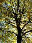 Дерево, фото № 256881, снято 25 мая 2017 г. (c) ElenArt / Фотобанк Лори