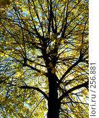 Купить «Дерево», фото № 256881, снято 19 сентября 2018 г. (c) ElenArt / Фотобанк Лори