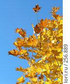 Купить «Листья», фото № 256889, снято 19 сентября 2018 г. (c) ElenArt / Фотобанк Лори