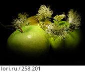 Натюрморт. Три зелёных яблочка с веточкой ивы. Стоковое фото, фотограф lana1501 / Фотобанк Лори