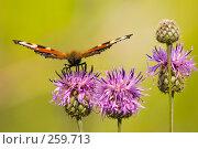 Купить «Бабочка», фото № 259713, снято 16 июля 2007 г. (c) Andrey M / Фотобанк Лори