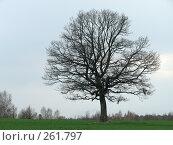 Купить «Одинокий дуб в широком поле», фото № 261797, снято 9 апреля 2008 г. (c) Мещенко Олег / Фотобанк Лори