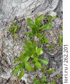 Купить «Первые зелененькие листочки», фото № 262201, снято 19 апреля 2008 г. (c) Мария Коробкина / Фотобанк Лори
