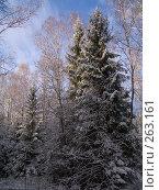Купить «Солнечные лучи», фото № 263161, снято 5 ноября 2007 г. (c) Вячеслав Потапов / Фотобанк Лори