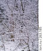 Купить «Заснеженная чаща», фото № 263185, снято 4 ноября 2007 г. (c) Вячеслав Потапов / Фотобанк Лори