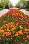Тюльпановый рай, фото № 264209, снято 27 апреля 2008 г. (c) Владимир Гуторов / Фотобанк Лори