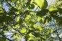 Фон: молодая листва, фото № 264853, снято 27 апреля 2008 г. (c) Роман Коротаев / Фотобанк Лори