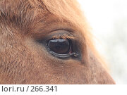 Купить «Глаз лошади», фото № 266341, снято 14 апреля 2008 г. (c) Шавыкин Александр / Фотобанк Лори