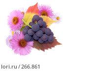 Купить «Осенний натюрморт из цветов и ветки винограда», фото № 266861, снято 1 октября 2006 г. (c) Анатолий Заводсков / Фотобанк Лори