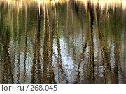 Купить «Отражение в воде», фото № 268045, снято 11 апреля 2008 г. (c) Виктория Щепкина / Фотобанк Лори