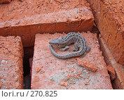Купить «Ящерица на кирпичах», фото № 270825, снято 28 апреля 2008 г. (c) Олег Хархан / Фотобанк Лори
