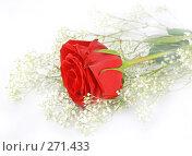 Купить «Красивая нежная роза на белом фоне», фото № 271433, снято 12 декабря 2007 г. (c) Вероника Галкина / Фотобанк Лори