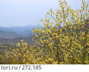 Купить «Горная верба весной», фото № 272185, снято 2 мая 2008 г. (c) RedTC / Фотобанк Лори