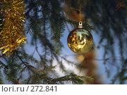 Купить «Шар на елке», фото № 272841, снято 15 января 2006 г. (c) Морозова Татьяна / Фотобанк Лори