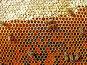 Нектар; мед; пыльца, перга, фото № 273273, снято 8 июля 2006 г. (c) Андрей Давиденко / Фотобанк Лори