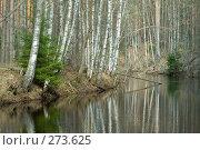 Купить «Лесная река», фото № 273625, снято 27 апреля 2008 г. (c) Малышева Мария / Фотобанк Лори