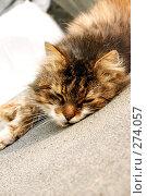 Купить «Кот», фото № 274057, снято 25 сентября 2018 г. (c) Куракевич Иван / Фотобанк Лори