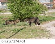 Купить «Это мой континентальный шельф», фото № 274401, снято 4 мая 2008 г. (c) Игорь Момот / Фотобанк Лори