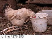 Купить «Любопытная курица», фото № 276893, снято 26 июня 2006 г. (c) Василий Козлов / Фотобанк Лори