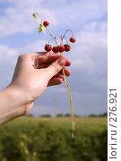 Купить «Земляника в руке», фото № 276921, снято 7 июня 2006 г. (c) Василий Козлов / Фотобанк Лори