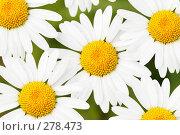 Купить «Ромашки», фото № 278473, снято 26 марта 2019 г. (c) Роман Сигаев / Фотобанк Лори