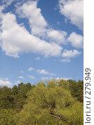Купить «Лес весной», фото № 279949, снято 27 апреля 2008 г. (c) Вячеслав Потапов / Фотобанк Лори