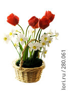 Весенний букет цветов. Тюльпан и нарциссы, фото № 280061, снято 3 мая 2008 г. (c) Евгений Захаров / Фотобанк Лори