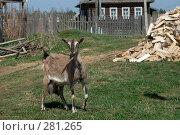 Купить «Коза в деревне», фото № 281265, снято 3 мая 2008 г. (c) Малышева Мария / Фотобанк Лори