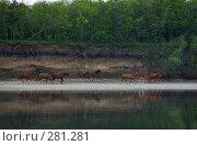 Купить «Лошади скачут по берегу реки», фото № 281281, снято 1 мая 2008 г. (c) Игорь Струков / Фотобанк Лори