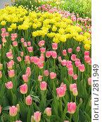Купить «Ковер из тюльпанов», фото № 281949, снято 27 апреля 2008 г. (c) Мария Коробкина / Фотобанк Лори
