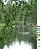 Купить «Ветка березы на фоне речной заводи», фото № 283861, снято 24 июня 2006 г. (c) Елена Александрова / Фотобанк Лори