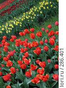 Купить «Цветочная клумба», фото № 286401, снято 13 мая 2008 г. (c) Коваленко Ирина / Фотобанк Лори