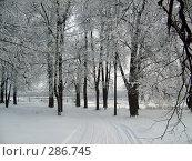 Зима в парке. Стоковое фото, фотограф Александр Бобиков / Фотобанк Лори