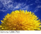 Купить «Одуванчик на фоне синего неба», фото № 288753, снято 21 января 2018 г. (c) Владимир Сергеев / Фотобанк Лори