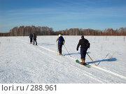 Купить «Туристы в лесу на лыжах», фото № 288961, снято 23 марта 2008 г. (c) Селигеев Андрей Иванович / Фотобанк Лори