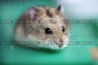 Купить «Джунгарик», фото № 289073, снято 17 мая 2008 г. (c) Игорь Веснинов / Фотобанк Лори