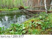 Купить «Лес на болоте», фото № 289977, снято 30 июня 2007 г. (c) Сергей Сынтин / Фотобанк Лори
