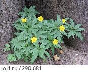 Купить «Маленький кустик с цветочками», фото № 290681, снято 1 мая 2008 г. (c) Мария Коробкина / Фотобанк Лори