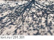 Купить «Тень от липы», эксклюзивное фото № 291301, снято 16 мая 2008 г. (c) Александр Щепин / Фотобанк Лори