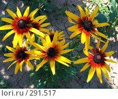 Садовые цветы. Стоковое фото, фотограф Вячеслав Паслёнов / Фотобанк Лори
