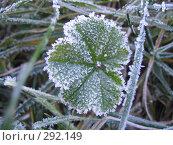 Купить «Первые заморозки», фото № 292149, снято 6 ноября 2007 г. (c) Михаил Ковалев / Фотобанк Лори